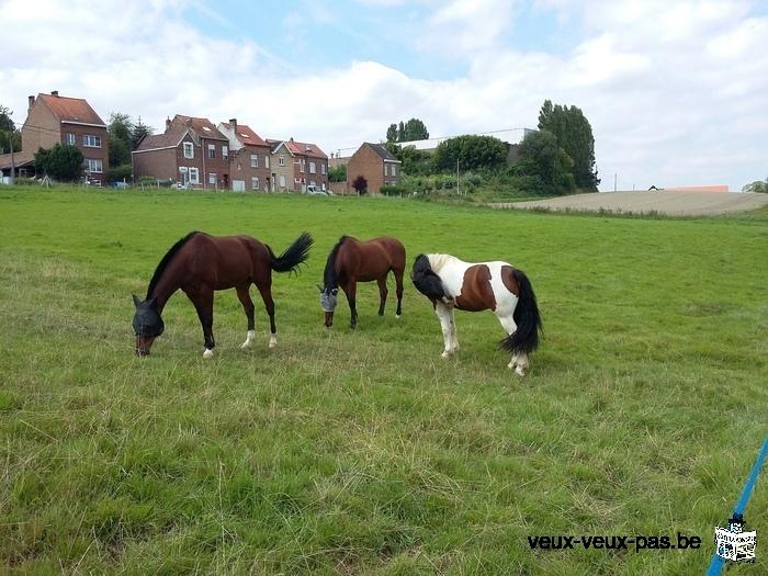A louer boxes et prairies pour chevaux toute l'année